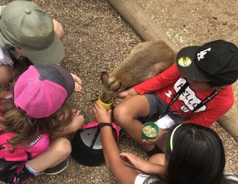 Kids feeding a baby Kangaroo - Clementson's Outside School Hours Care (OSHC)